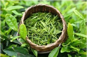 wholesale bio green tea extract Tea polyphenols supply by sost 1