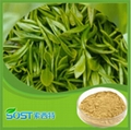 wholesale bio green tea extract Tea polyphenols supply by sost 3