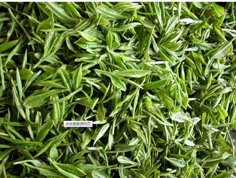 wholesale bio green tea extract Tea polyphenols supply by sost 5