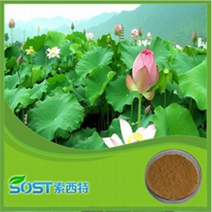 China supplier herb extract folium nelumbinis extract nuciferine lotus leaf p.e.