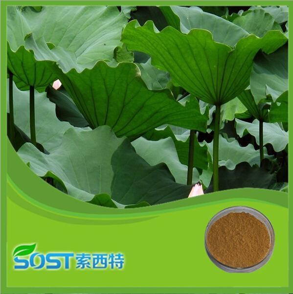 China supplier herb extract folium nelumbinis extract nuciferine lotus leaf p.e. 2