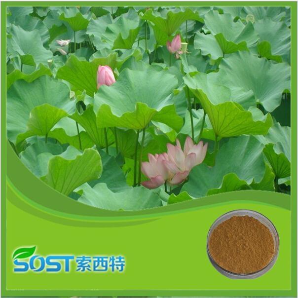 China supplier herb extract folium nelumbinis extract nuciferine lotus leaf p.e. 4