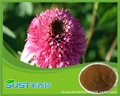 Chinese manufacturer supply best quality and hot sale echinacea extract  3