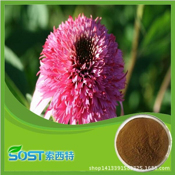 Chinese manufacturer supply best quality and hot sale echinacea extract  4