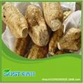 wholesale best price Kudzu Root Extract