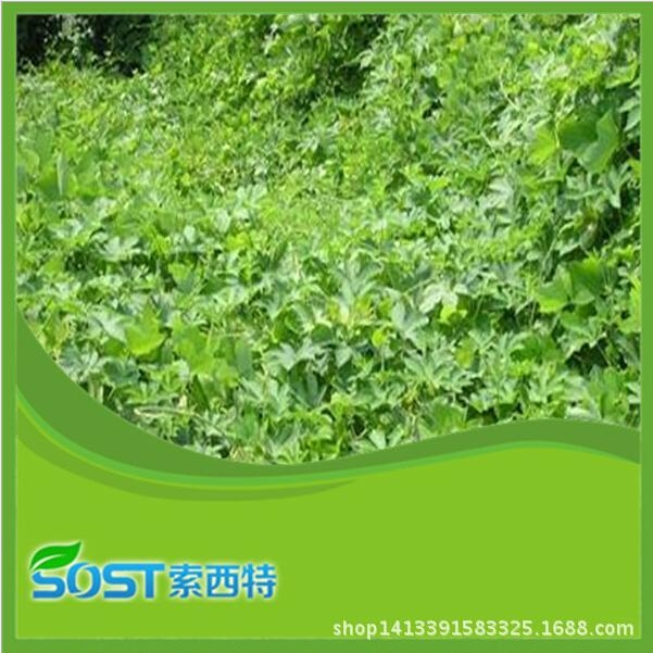 wholesale best price Kudzu Root Extract supply by sost 3