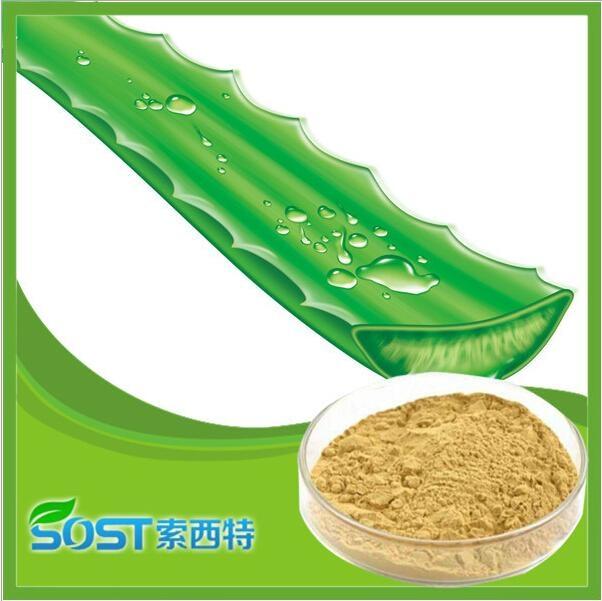 manufacturer supply competitive price Aloe vera Powder 2