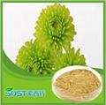manufacturer supply competitive price Aloe vera Powder 3