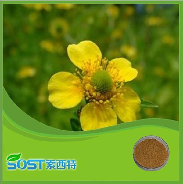 Plant Powder Chelerythrine Celandine Extract 1