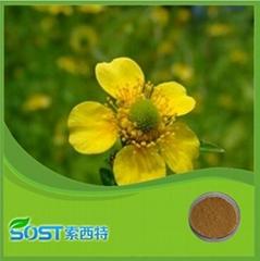 Plant Powder Chelerythrine Celandine Extract