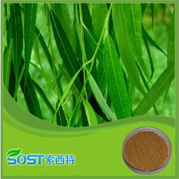 White Willow Bark Extract Salicin HPLC 10% 2