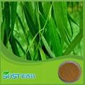 White Willow Bark Extract Salicin HPLC 10% 3