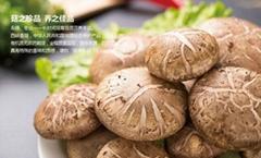 Xixia Mushroom