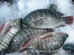 Frozen Tilapia good quality seafood