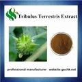 Free Samples High Quality Tribulus