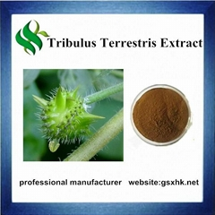 Free Samples High Quality Tribulus Terrestris Extract