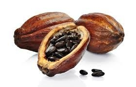 Cacao beans 4