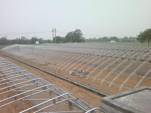壽光蔬菜溫室大棚建設 1