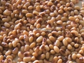 2016 new crop canned black eye beans