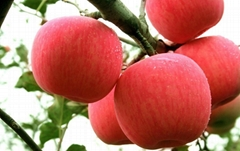 US Eight Apple