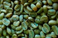 Pure Natural Green coffee bean extract 50% chlorogenic acids 3
