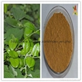 pure Natural Gymnema sylvestre extract