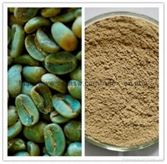Pure Natural Green coffee bean extract 50% chlorogenic acids