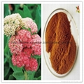Natural Rhodiola Rosea Extract 3% 5% 10%