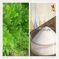 natural 99% Artemisinin Sweet Wormwood
