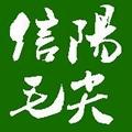 信阳毛尖春尾茶 2