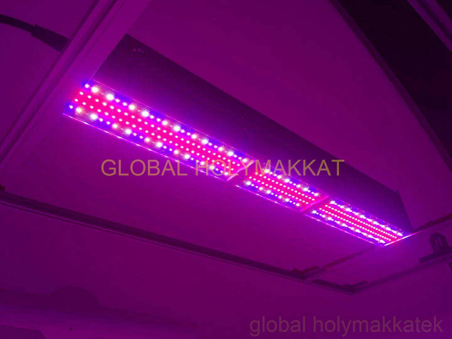 2019 new 350w led horticulture grow light for greenhouse top lighting 1