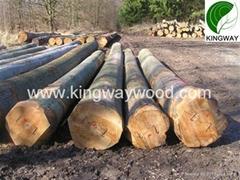 供应优质FSC欧洲榉木原木锯材级