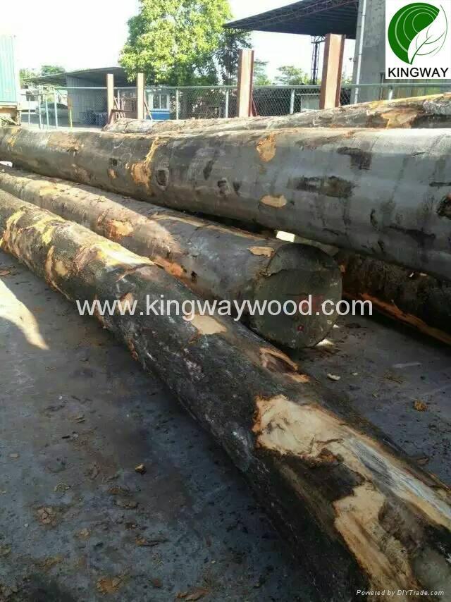 供应优质FSC欧洲榉木原木锯材级 2