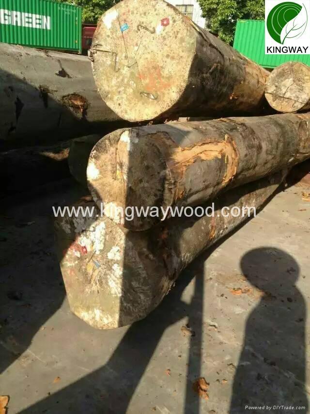 供应优质FSC欧洲榉木原木锯材级 3