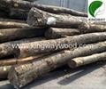 供应优质FSC欧洲榉木原木锯材级 4