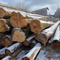欧洲榉木原木