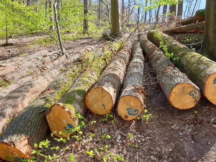 欧洲白橡木原木 2
