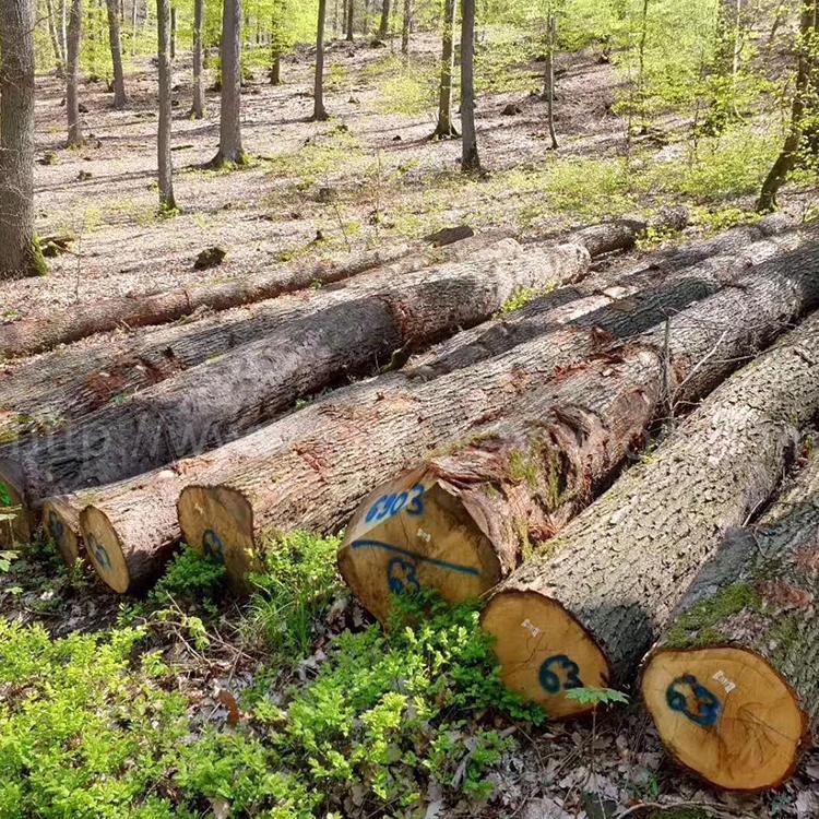 欧洲白橡木原木 3