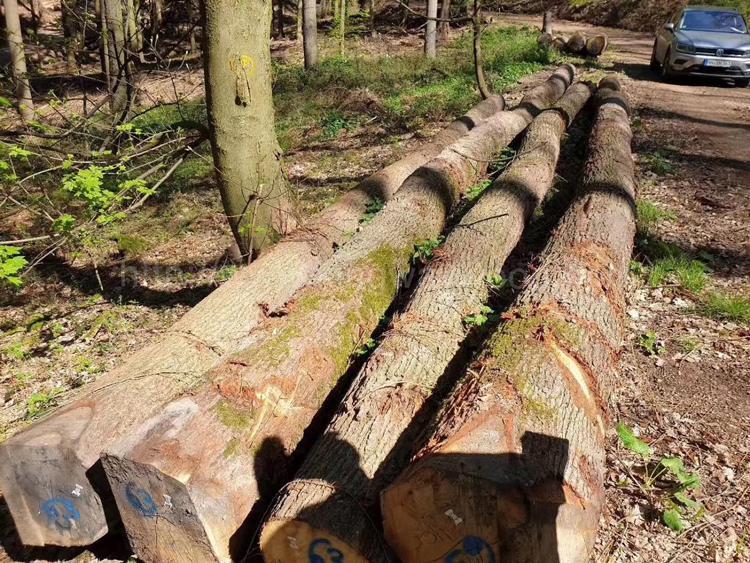 欧洲白橡木原木 4