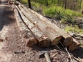 欧洲白橡木原木 5