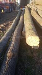 欧洲白蜡木原木