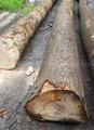 欧洲白蜡木原木 5