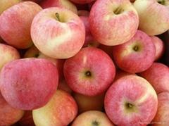 Gala Apple 100-125 pcs in 20kg ctn apple