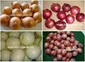Peeled Onion