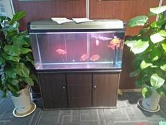 济南高新区齐鲁软件园鱼缸