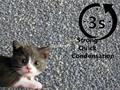 long term supply high grade bentonite cat litter 2