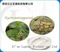 100% Natural Astragalus Root Extract
