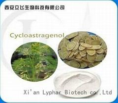 100% Natural Astragalus Root Extract Cycloastragenol 98%
