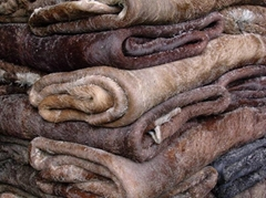 Wet Salted Cow , Donkey and Buffalo hides