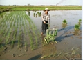 2015 2 rows hand crank rice transplanter